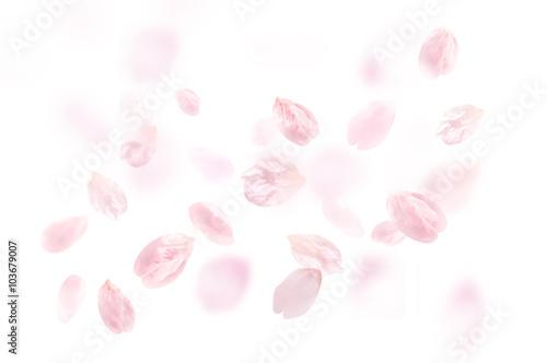 桜 花びら ふわふわ 白