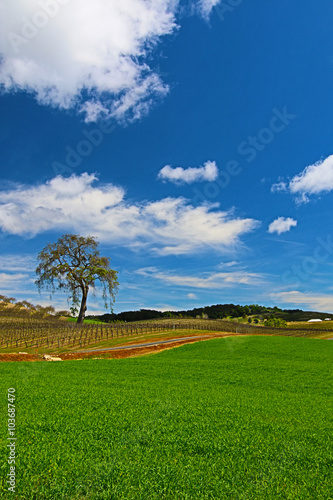 Tuinposter Canyon Paso Robles Wine Country Scenery
