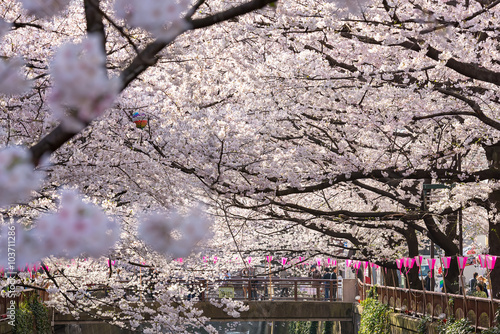 TOKYO, JAPAN - March 30 : Tourist unidentified taking picture with Cherry blossom flower taken March 30, 2015 in Naga Meguro area, Tokyo. This area is popular sakura spot in Tokyo with beautiful canal - 103711286