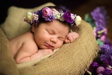 Beautiful Newborn Baby Girl With A Purple Wreath Sleeps In A Wicker Basket