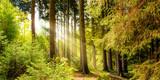 Fototapeta Fototapety na ścianę - Wald Landschaft im Sommer mit Sonnenstrahlen