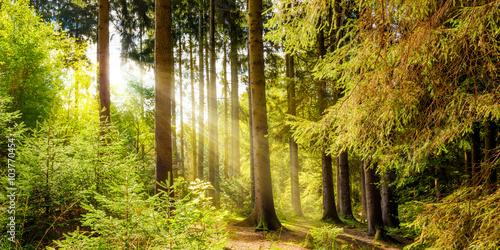 Poster Miel Wald Landschaft im Sommer mit Sonnenstrahlen