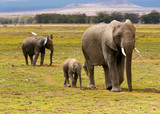 Słonie w Amboseli