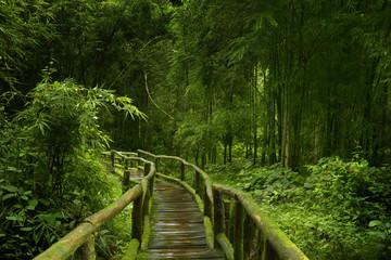 Panel Szklany Bambus Selva asiática