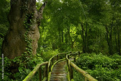 Foto op Plexiglas Landschappen Selva asiática