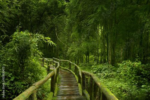 Selva asiática - 103830475