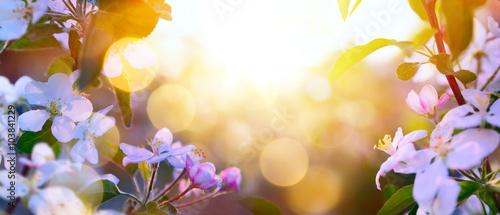 Tuinposter Honing art Spring Blooming background