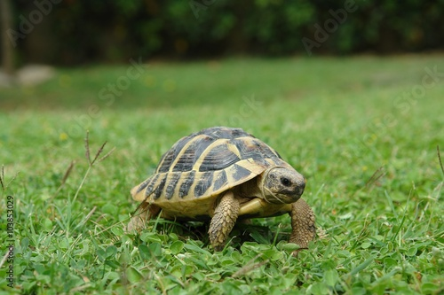 Foto op Plexiglas Schildpad tartarughe