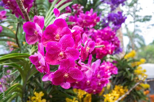 Staande foto Roze Beautiful orchid flowers.