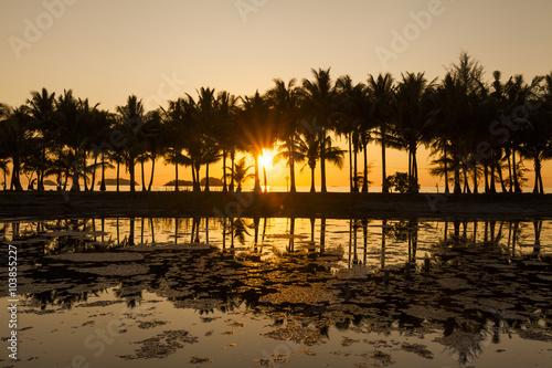 Papiers peints Morning Glory Coconut palms on the sandy beach of the tropical island. Koh Cha