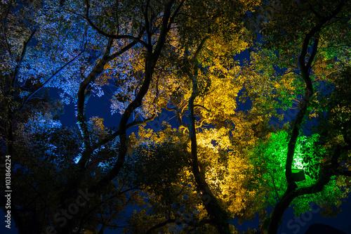 Leinwand Poster  Bäume im Park in China in der Nacht