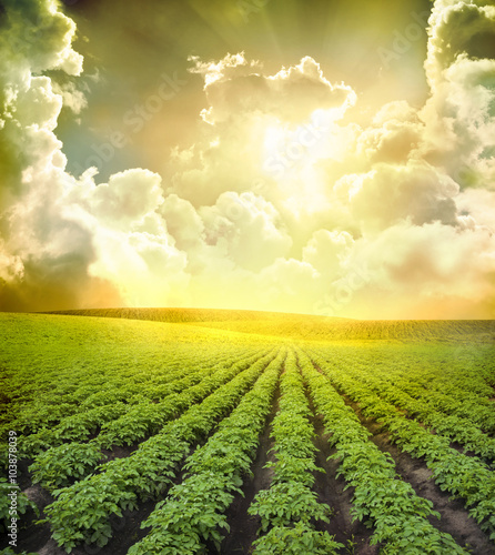 Canvas Prints Village Potato field