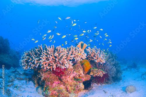 Tuinposter Koraalriffen School of colorful fish on coral reef in ocean