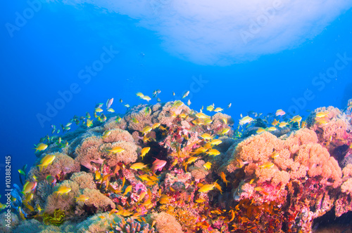 Fotobehang Onder water School of colorful fish on coral reef in ocean