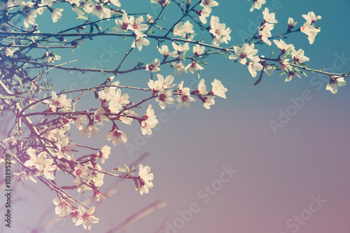 Photo  abstract dreamy and blurred image of spring white cherry blossoms tree