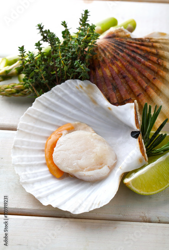 Canvastavla  Raw fresh scallops in the shell with lime, asparagus