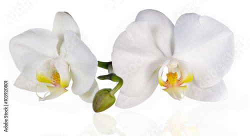 Fotobehang Orchidee White orchids on white