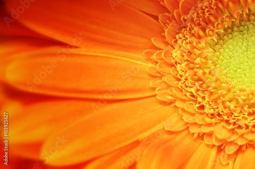 Fiore arancione margherita