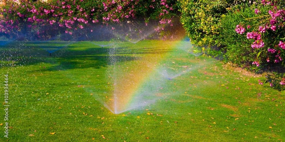 Fototapety, obrazy: watering  sprinkler  lawn