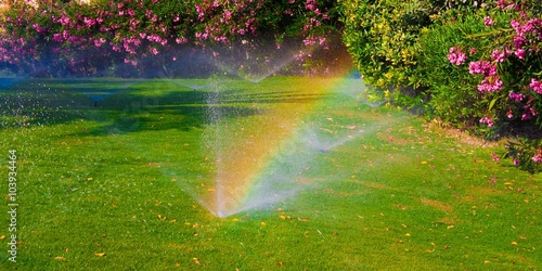 Obraz watering  sprinkler  lawn - fototapety do salonu