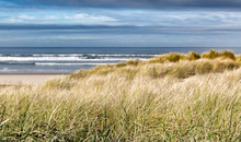 Grassy Sand Dunes On A Windswe...