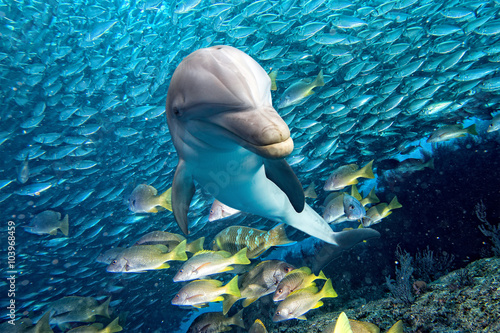 Poster Sous-marin dolphin underwater on blue ocean background
