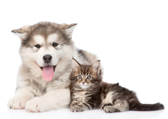 alaskan malamute dog and ma...