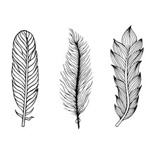 Set Of Hand Drawn Feathers. Ve...