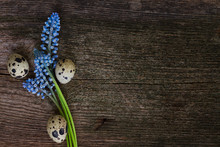 Muscari And Eggs