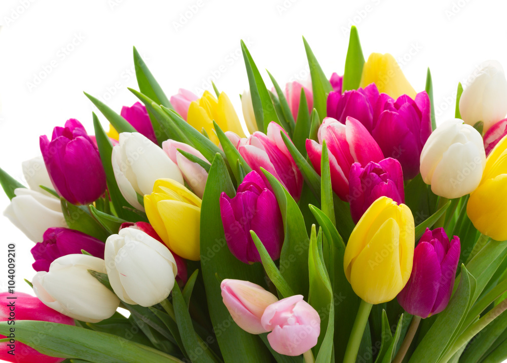 bouquet of  pink, purple and white  tulips - obrazy, fototapety, plakaty