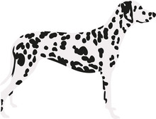 Dalmatian In Two Colors With S...