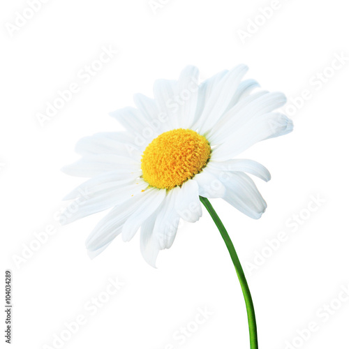 Photo sur Toile Marguerites Freigestellte Kamille
