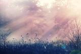 Fog in meadow - 104043605