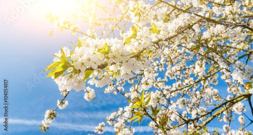 obraz PCV Frühlingsblüte