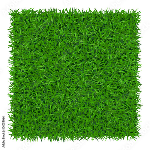 Green grass background. Lawn nature. Abstract field texture. Symbol of summer, plant, eco and natural, growth or fresh. Design for card, banner. Meadow template for print products. Vector Illustration Wall mural