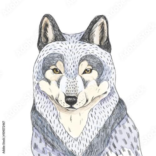 Szkic wilka Akwarela ilustracja