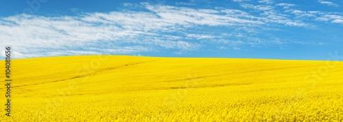 Foto auf Gartenposter Landschappen golden field of flowering rapeseed with beautiful clouds