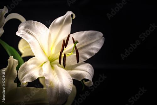 Fototapety, obrazy: Lily, close-up, macro.