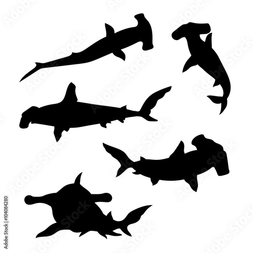 Obraz Hammerhead shark set vector - fototapety do salonu