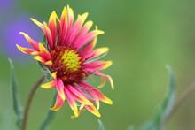 Macro Close Up Of A Wild Natur...
