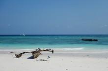 The Beach At Ras Nungwi, A Tra...