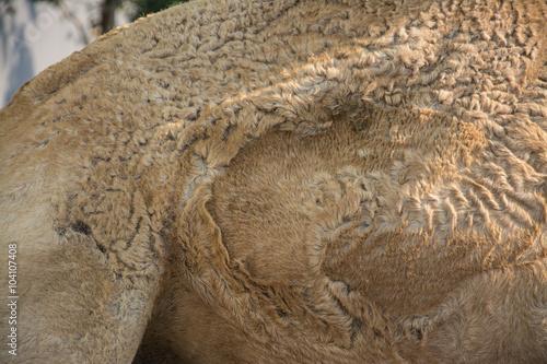 Photo  Camels hair, wildlife