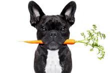 Healthy Food Dog