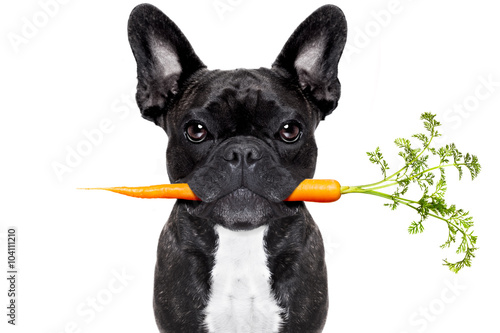 Photo sur Aluminium Chien de Crazy healthy food dog