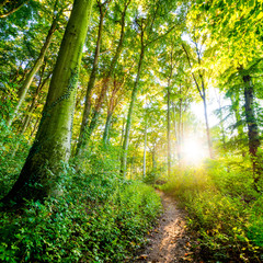 Panel Szklany Krajobraz Waldweg im Sonnenschein