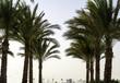 Palm trees against sky in desert.