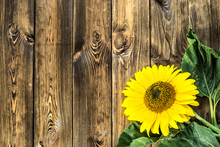 Sunflower On Rustic Wood Background. Flowers Backgrounds.