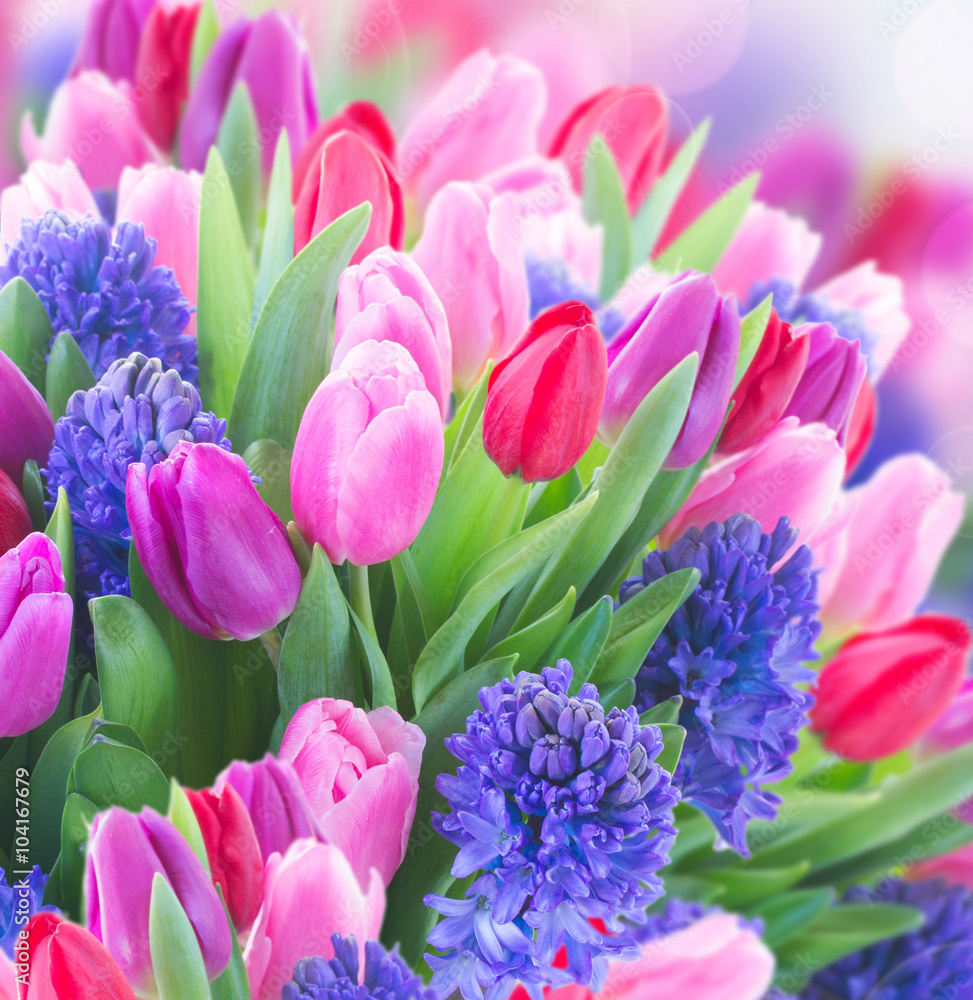 Fototapety, obrazy: bouquet of   blue hyacinth and  tulips