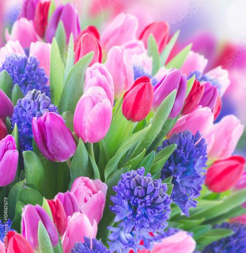 Obraz Bukiet niebieskich hiacyntów i tulipanów - fototapety do salonu