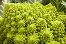 Broccolo Romanesco, Ortaggio Con Struttura Frattale